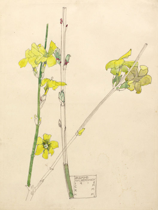 Watercolours By Charles Rennie Mackintosh